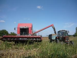 P1190844 Аграрии Бессарабии вырастили прекрасный урожай зерновых культур