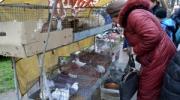 Птичий рынок собрал любителей живности со всей Бессарабии