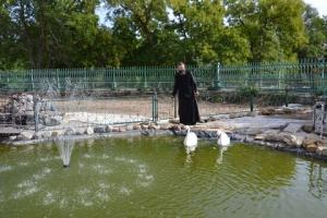 Двор собора в Болграде украсят экзотические птицы