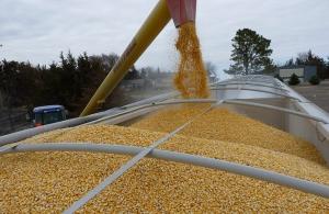 Украина за январь-сентябрь экспортировала кукурузы на $2 млрд