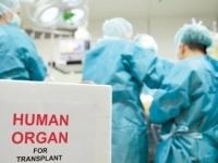 Трансплантация органов в Украине: закон принят