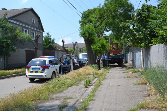 Общественники потребовали у коммунальщиков-дровосеков разрешение на спил деревьев