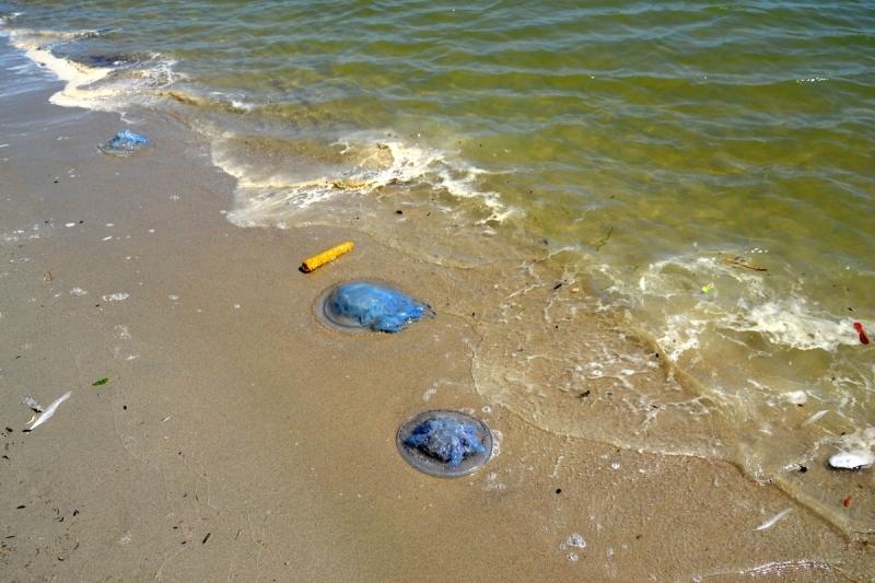 Голубые медузы, белоснежные цапли и летающие пакеты: в Приморском завершается курортный сезон