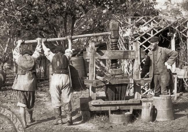 В поле зрения – виноградарство и виноделие