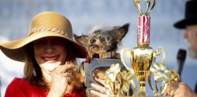 В США выбрали самую уродливую собаку в мире: забавные фото победителя