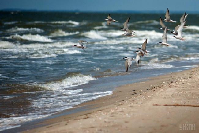 Чёрное море почти в два раза грязнее Средиземного