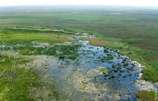 Нижнеднестровский национальный природный парк возглавит бывший сотрудник экологической и рыбной инспекций