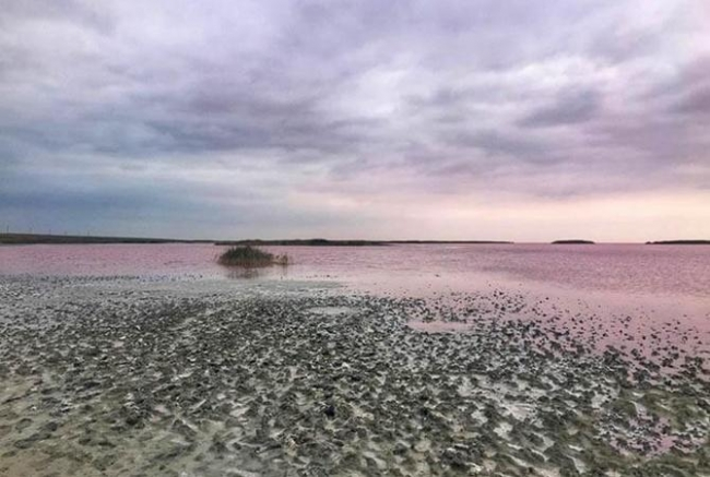 Удивительное розовое Лемурийское озеро на Херсонщине поменяло цвет