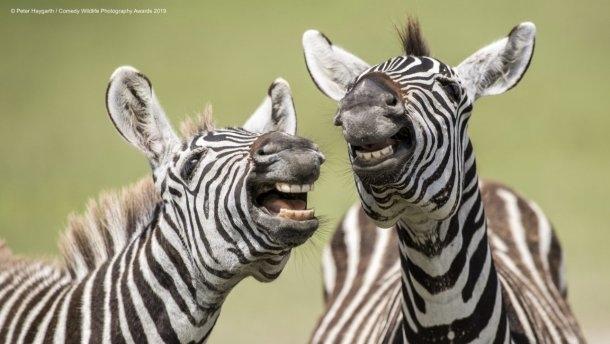Такие искренние и непосредственные: подборка смешных фото с конкурса Comedy Wildlife Photography