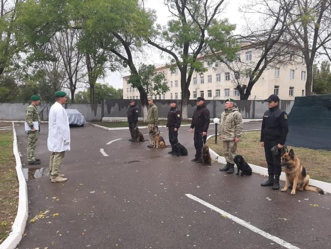 Здоровье служебных собак - путь к надёжной охране государственной границы