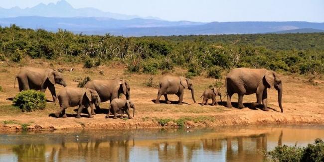 В Таиланде десятки слонов были выпущены на волю