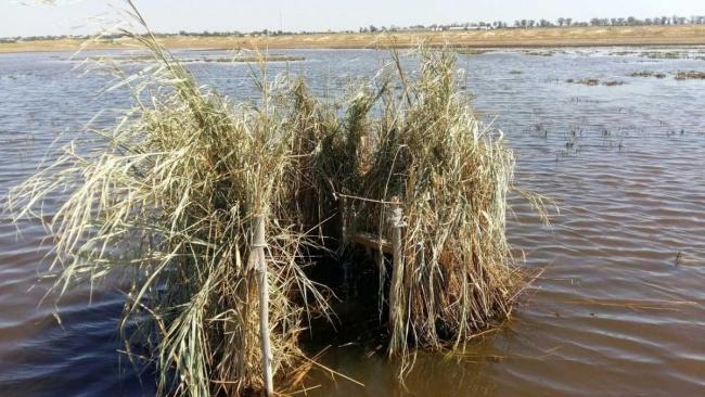 В заповеднике «Тузловские лиманы» град убил сотни птиц