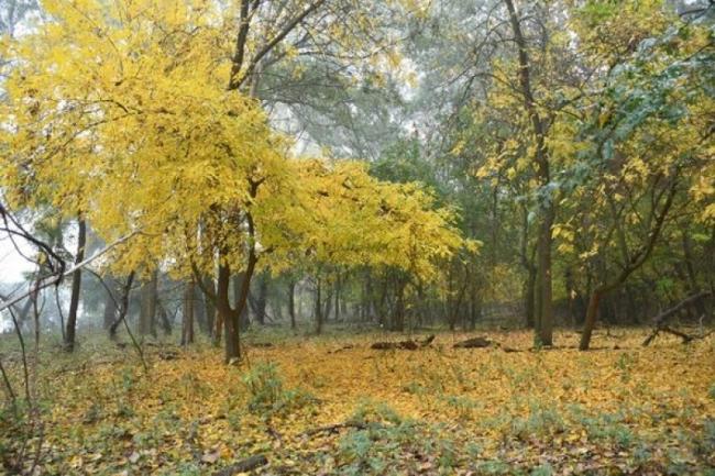 Остров Малый Татару в красках осени