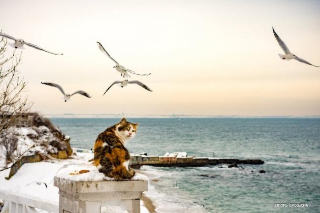 """Охотилась на чаек, а стала звездой """"Фейсбука"""": сеть рассмешили фото кошки-неудачницы из Одессы"""
