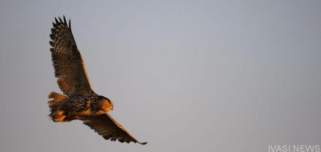 Краснокнижные птицы, выпущенные из Одесского зоопарка, прижились в дельте Дуная