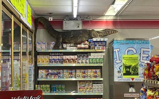 Гигантский варан пришел в супермаркет Таиланда за молоком