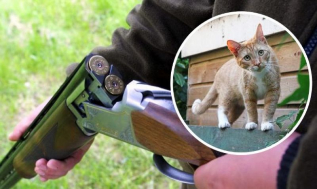 Подстрелившему соседскую кошку измаильчанину объявили о подозрении в жестоком обращении с животными