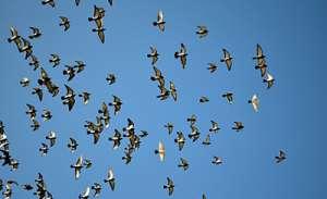 Больше, чем людей: численность птиц превышает население Земли в шесть раз