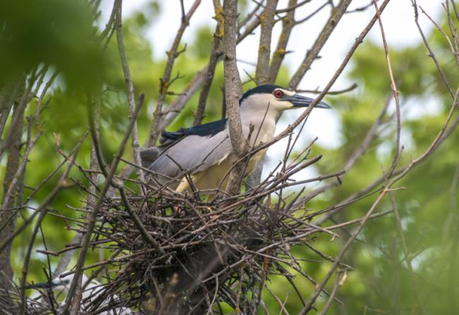 В дельте Дуная орнитологи вели учёт птиц: в их числе обнаружились и экзотические