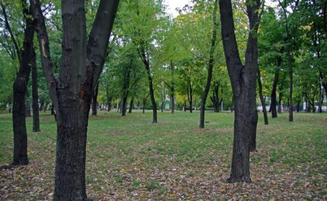 Зеленский предлагает высадить в Украине 1551 новый парк